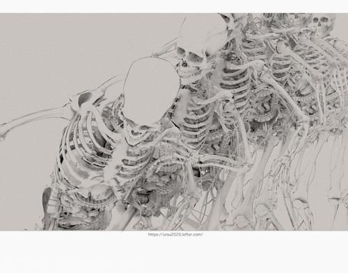 人体结构和运动规律