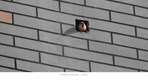 【小鸟的家】清晨接报,窝家闭关...